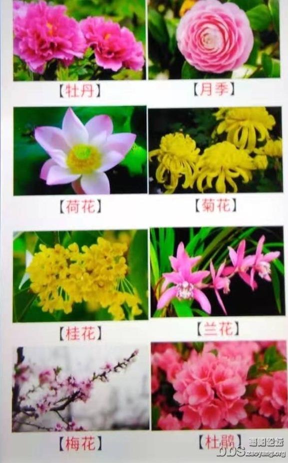 mmexport1578499774249(1).jpg